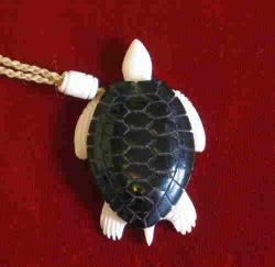 bone turtle photo